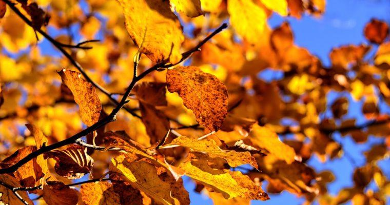 7 sposobów na bycie fit jesienią