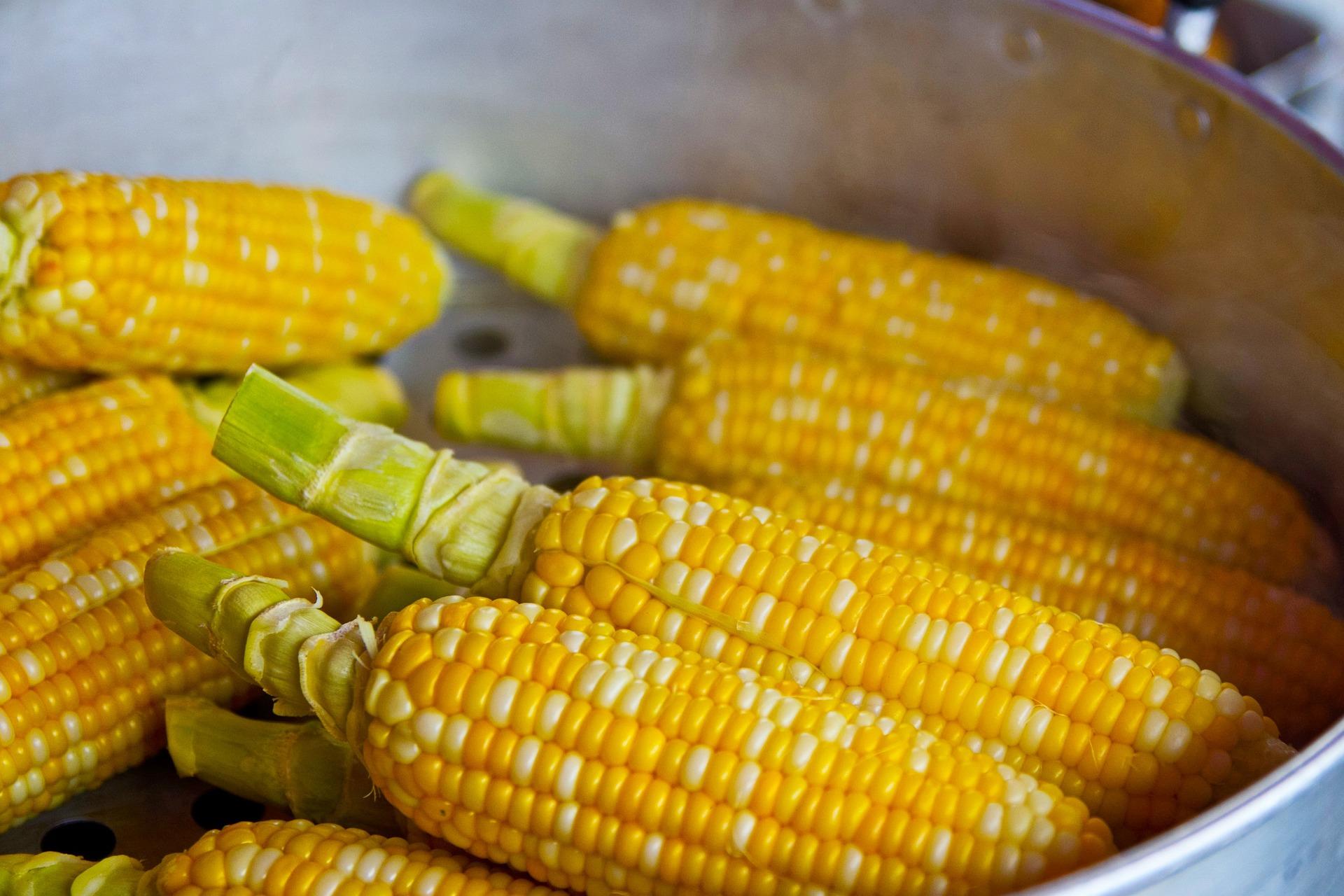 Dania z kukurydzy? Sprawdź najlepsze pomysły na obiad